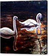 Beautiful White Swans Canvas Print