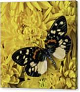 Beautiful Wings On Yellow Mums Canvas Print
