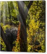 Beautiful Woodlands Canvas Print
