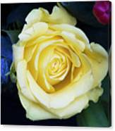 Beautiful Yellow Rose Canvas Print