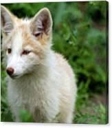 Beautiful Young Fox Portrait Canvas Print