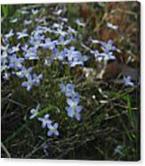 Beauty Blue Flowers Canvas Print