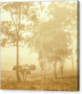 Beauty In A Forest Fog Canvas Print