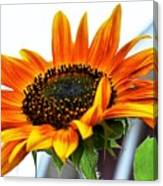 Beauty In A Sunflower Canvas Print