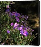 Beauty In The Night Time Canvas Print