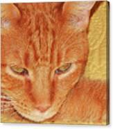 Beauty Of A Cat Canvas Print
