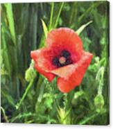 Beauty Of A Poppy  Canvas Print