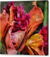 Beauty Of An Orchid Canvas Print