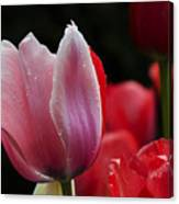 Beauty Of Spring Tulips 1 Canvas Print