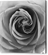 Beauty Of The Rose Ill Canvas Print