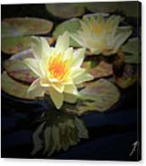 Beauty Of The Water Lily Canvas Print