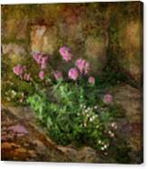 Beauty On An Old Stone Wall Canvas Print
