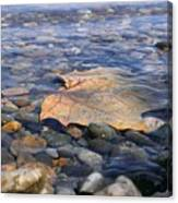 Beauty On The Shore Canvas Print
