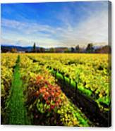 Beauty Over The Vineyard Canvas Print