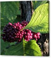 Beautyberry 2 Canvas Print