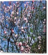 Beautiful Spring. Blooming Tree 2 Canvas Print