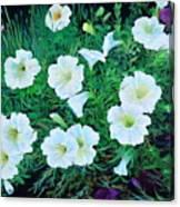 Beauyiful Petunias Canvas Print