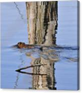 Beaver In Motion Canvas Print