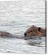 Beaver Pair I Canvas Print