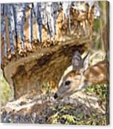 Beaver Wannabe Canvas Print