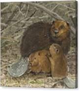 Beavers Canvas Print