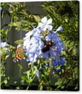Bee And Butterfly II Canvas Print