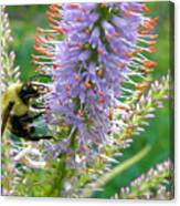 Bee And Its Lavender Delight Canvas Print