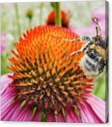Bee And Pink Flower Canvas Print