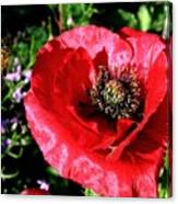 Bee And Red Poppy Canvas Print