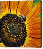 Bee And Sunflower. Canvas Print