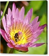 Bee And The Lily Canvas Print