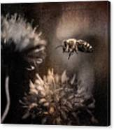 Bee Approaching Red Clover Blossom Canvas Print