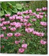 Bee Balm Garden Canvas Print