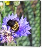 Bee Bee Canvas Print
