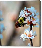 Bee Blossom Canvas Print
