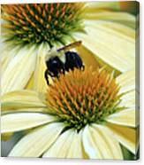 Bee Buzzer Canvas Print