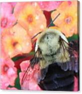 Bee Card Canvas Print