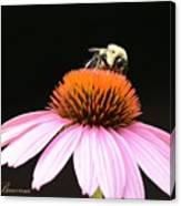 Bee Coneflower Canvas Print