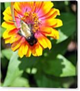 Bee Easy Canvas Print