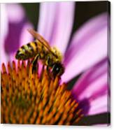 Bee Feasting Canvas Print