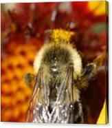 Bee Five - Canvas Print