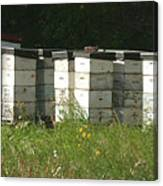 Bee Hives In A Farmer's Field Canvas Print