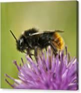 Bee I Canvas Print