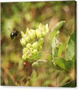 Bee In Flight Canvas Print