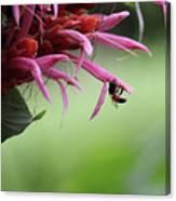 Bee In Kauai Canvas Print