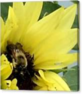 Bee In Sunflower Canvas Print