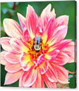 Bee In The Center Canvas Print