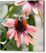 Bee Leaving Flower Canvas Print