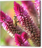 Bee Lunch Canvas Print