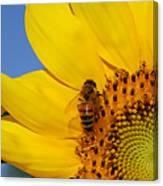 Bee My Sunshine Canvas Print